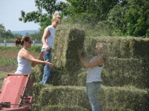 baling-hay