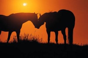Horse-Love-horses-4413038-600-402