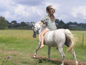 horse_running_by_hooded_gangsta