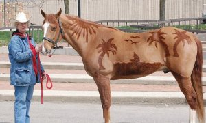 equinebodyclipart