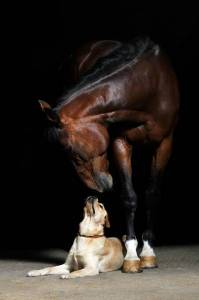 horse_and_dog_two