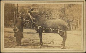 Old-Bob-Horse-LOC-1865