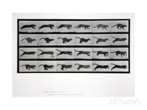 eadweard-muybridge-cat-running-plate-720-from-animal-locomotion-1887